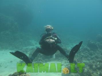 Povandeninis pasaulis su Nardymo akademija