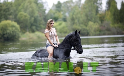 Tobulas žirgas